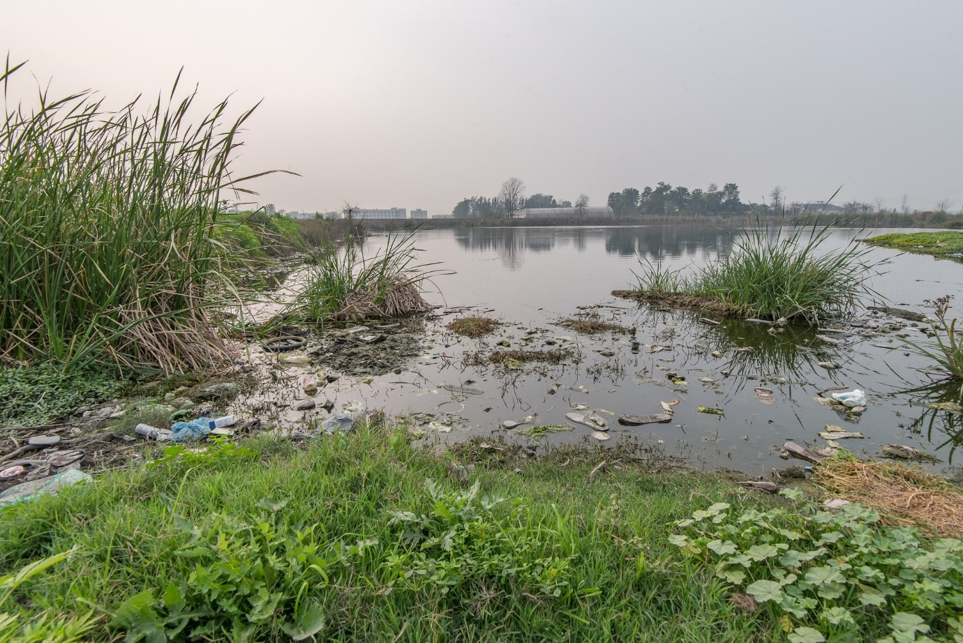 Contaminated pond at village Malakpur in Punjab (Photo by: Paramvir Singh Bhogal)