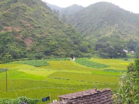 Mangalta village, an area planted with diverse traditional crops