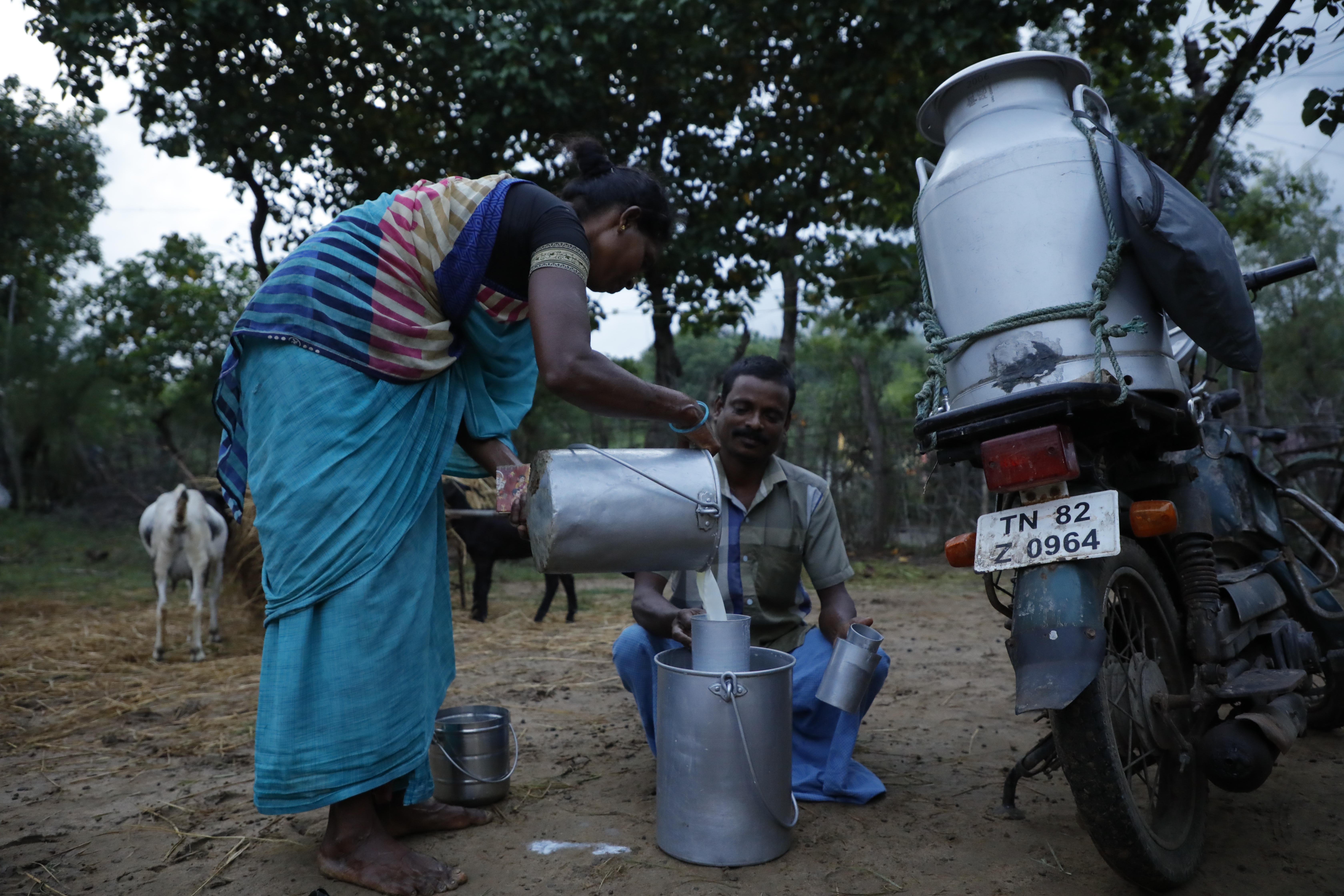 A woman sells milk to a vendor in Tamil Nadu, photo credit to MSSRF